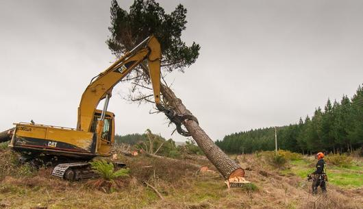 machine assisted felling